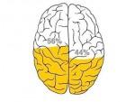 vignette-cerveau-